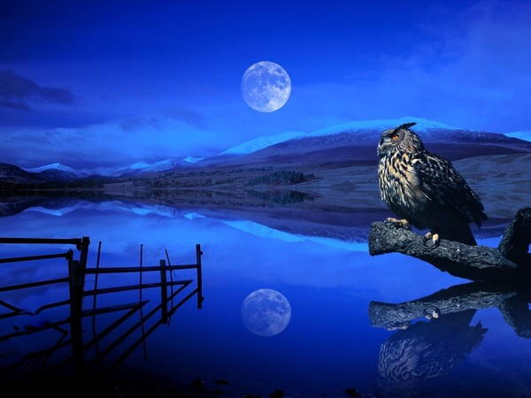 New_Moon%2C_Eagle-owl.jpg