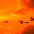 sunsetbirds.jpg