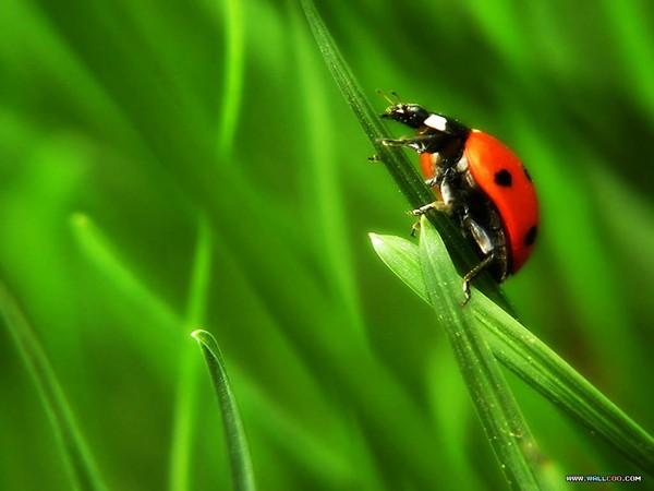 ladybug1.jpg