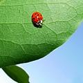ladybug2.jpg
