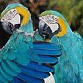 petbirds2.jpg