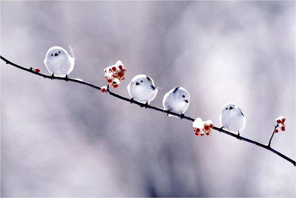 qbirds.jpg