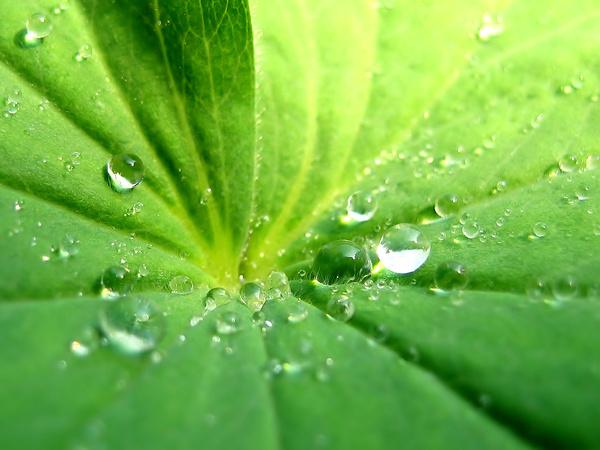 greenleaves2.jpg