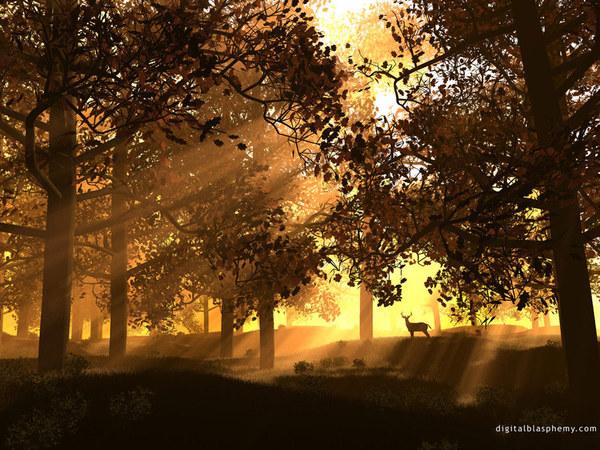 sunandtrees.jpg