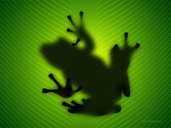 vladstudio_frog_1024x768.jpg