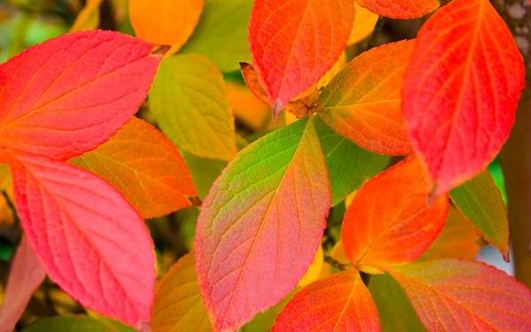 ws_Autumn_leafs_1280x800.jpg