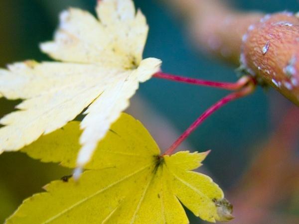 ws_Autumn_leafs_1024x768.jpg