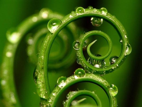 ws_Grass_Spirals_1024x768.jpg