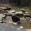 城堡的護城河裡有養熊!