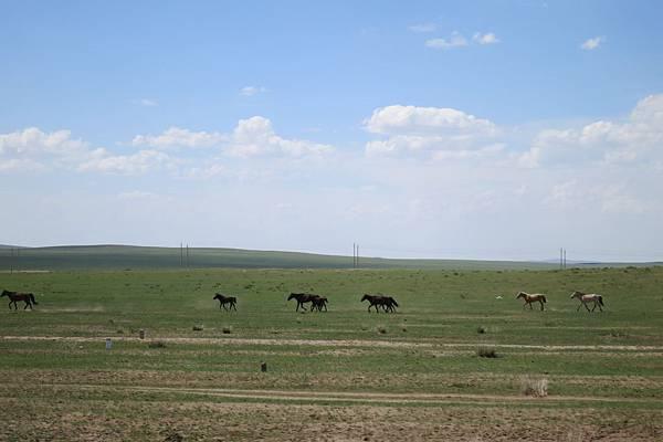 風吹草低見牛羊