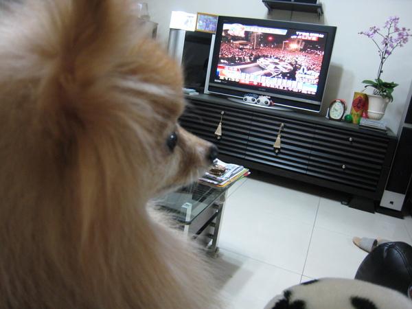 汪汪坐在我腿上看電視