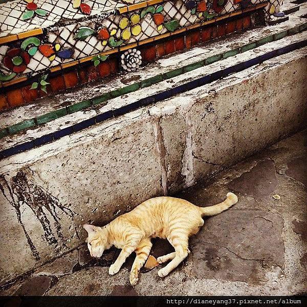 臥佛寺之貓