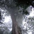 孔子是神木園裡年紀最長的… 也挺高大,深具長者年高德劭的風範。