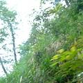 搭小巴,一路蜿蜒山路間,路邊荒煙漫草不斷。