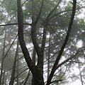 高山中的濃霧,與透著層層樹蔭而入的陽光,交織出一片水溶溶的光暈。