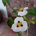 漂亮的小花