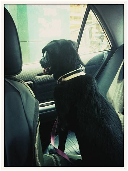 cola in car-2.jpg