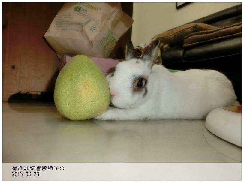 CIMG1377_副本