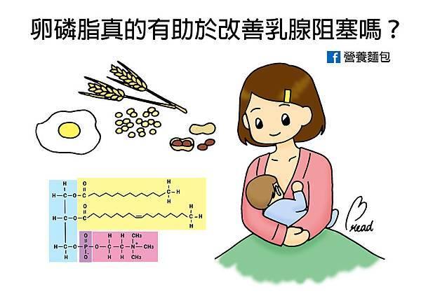 卵磷脂真的有助於改善乳腺阻塞嗎?