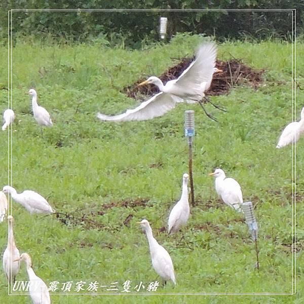 2012.09.01-2-UNRV露頂家族-新竹觀雲亭-031