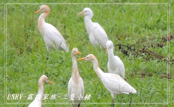 2012.09.01-2-UNRV露頂家族-新竹觀雲亭-032