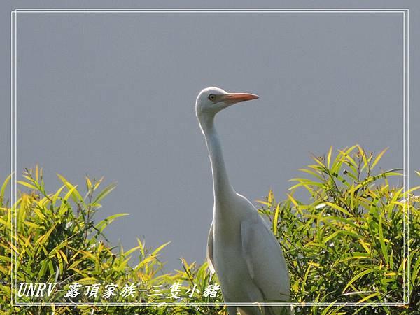 2012.09.01-2-UNRV露頂家族-新竹觀雲亭-085
