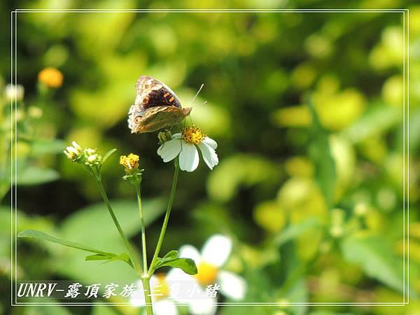 2012.09.01-2-UNRV露頂家族-新竹觀雲亭-100