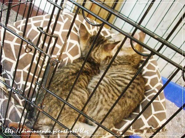 這裡有四隻貓,兩兩一籠