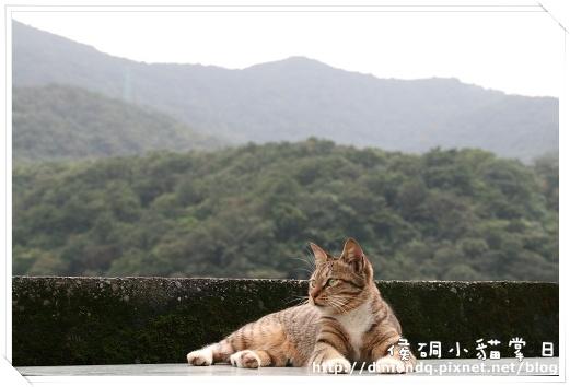 美麗的虎斑貓和美麗的山景