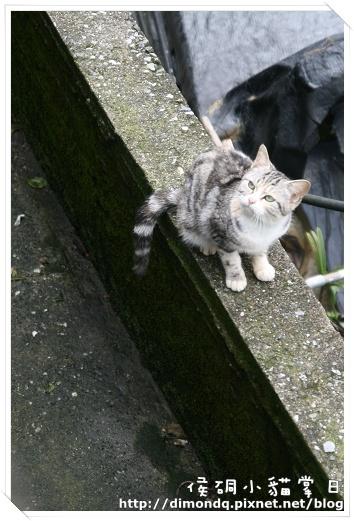 是這裡的貓咪嗎?!