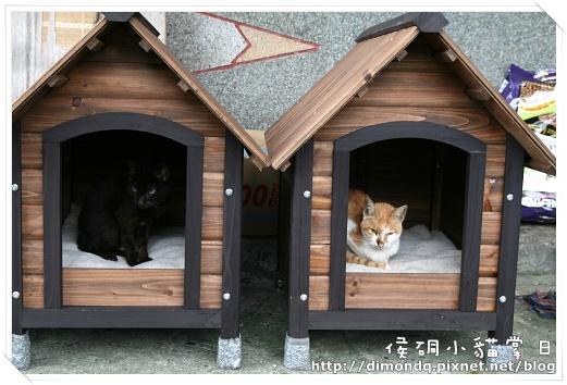 貓屋裡已經有貓入住囉!是很瘦小的黑貓和橘白貓