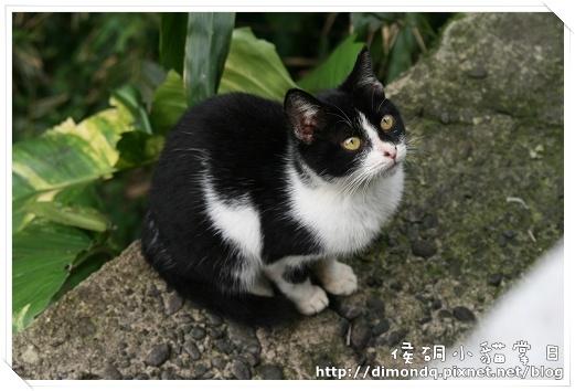 很可愛的黑白貓