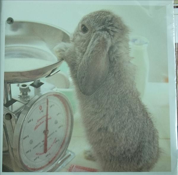 最近好喜歡兔子
