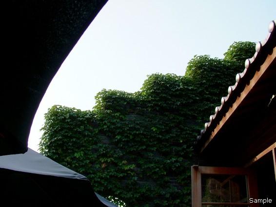 綠葉方舟089.jpg