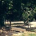 樹根破壞步道.JPG
