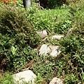 石圍牆老樹016.JPG