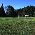 梅峰農場012.jpg