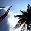 棕櫚與旗1.JPG