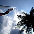 棕櫚與旗2.JPG