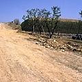 香菇林14.jpg