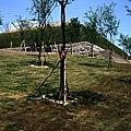香菇林009.jpg