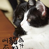 Movie, 猫なんかよんでもこない。(日) / 為什麼貓都叫不來(台) / Neko Nanka Yondemo Kona(英文), 電影海報, 台灣