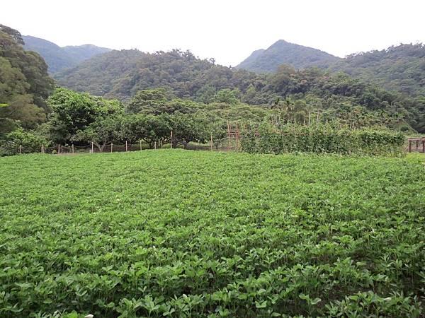 頭城農場, 農場環境, 附近環境