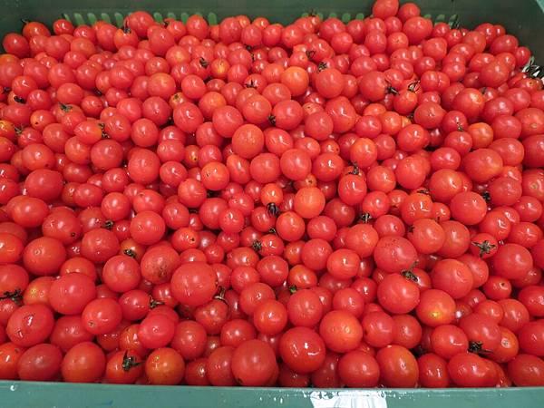 頭城農場, 體驗, 水果醋製作