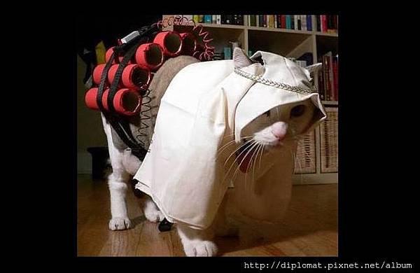 貓咪阿布本尊像 Abu Miaou