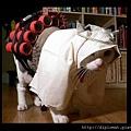 阿布貓咪聖戰士