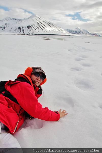北極熊掌印比我的手大三倍以上!