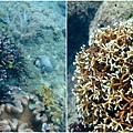 海中珊瑚.jpg