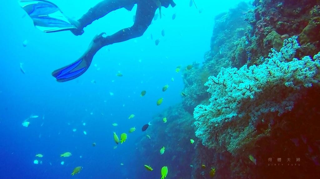 珊瑚花2.jpg