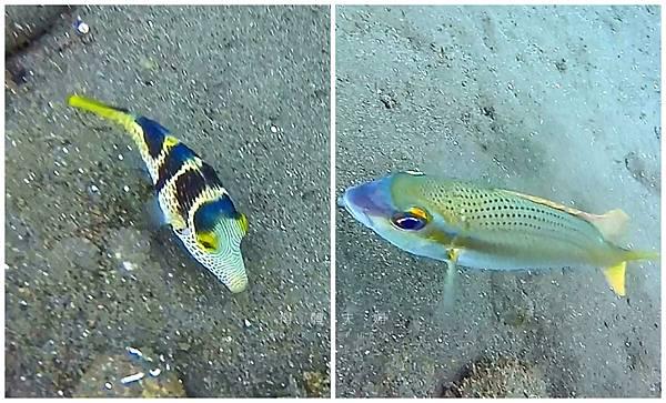 兩隻魚.jpg